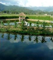Fish farm at Zero, Arunachal Pradesh