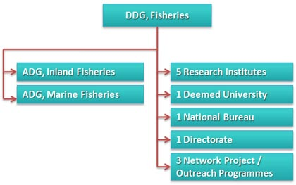 Organizational Structure of Fisheries Division