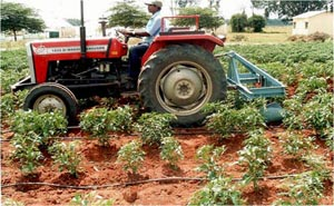 Tractor operated raised bed weeder