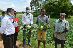 Eco-friendly Management of Insect Pests of Cabbage and Cauliflower through ICAR-IIHR's Neem Seed Powder Pellet Formulation