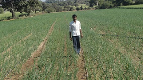 Protected Cultivation Improved Livelihood of Farmers in Madhya Pradesh