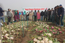 Root Crop carnival organized at ICAR-Central Institute of Temperate of Horticulture, Srinagar