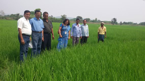 Rice Value Chain in PPP mode for increasing