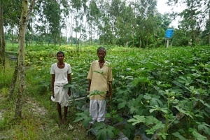 Solar Powered Drip Irrigation Transforms Agriculture Remote Village of Sundarbans in West Bengal